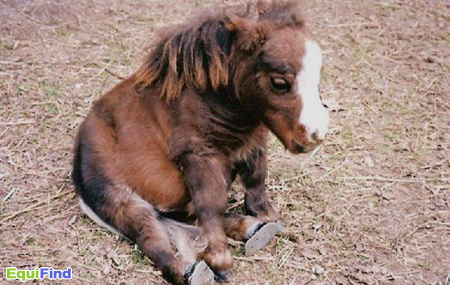 What a cute pony!