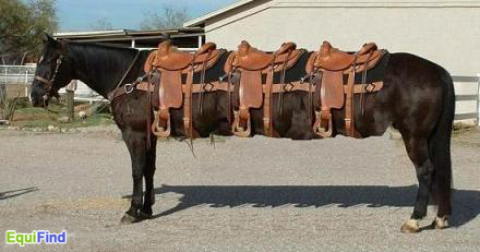 Stretched horse pic - funny image