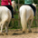 Choosing a First Riding School